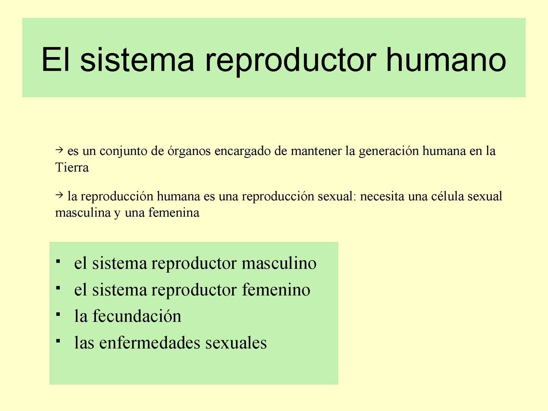 Calaméo - SISTEMA REPRODUCTOR HUMANO.rmm