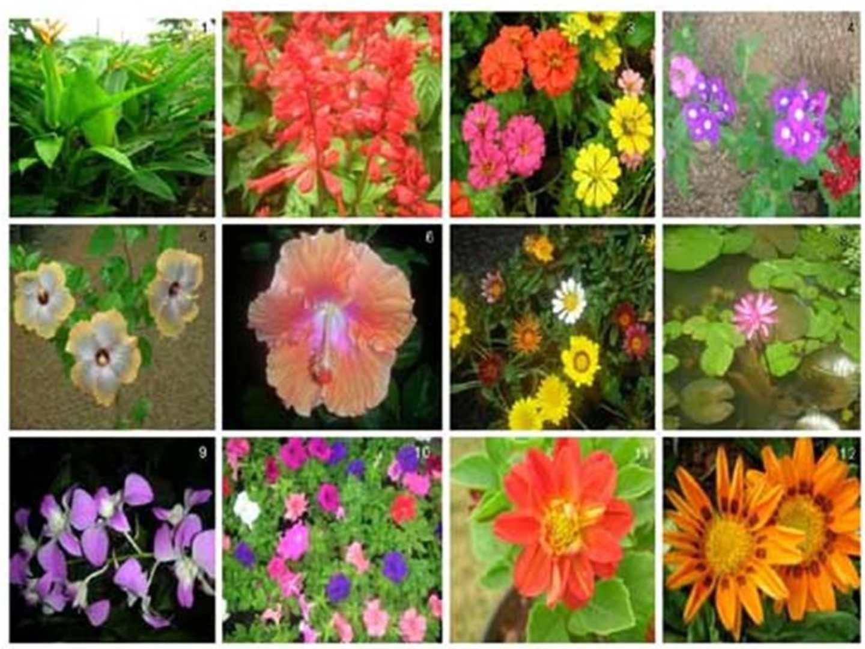 Calam o herbario for Clases de plantas ornamentales