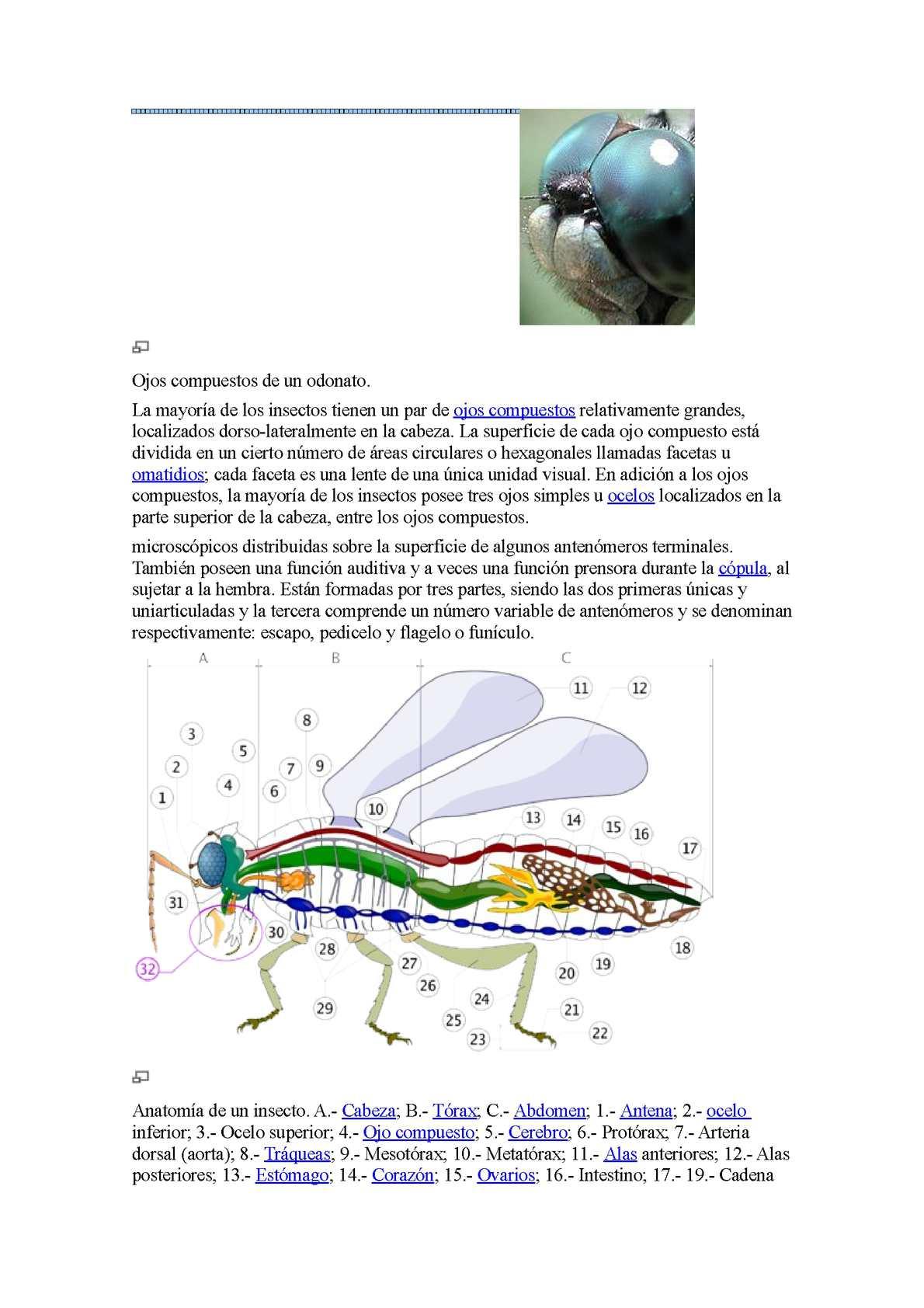Calaméo - insectos