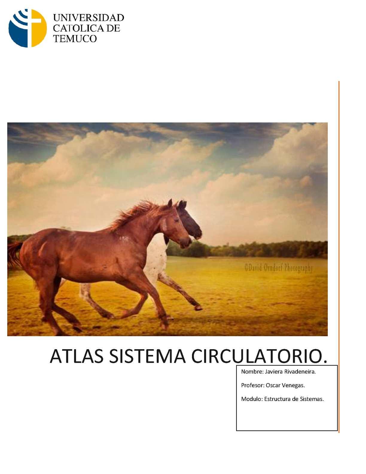Calaméo - Atlas Sistema Circulatorio Equino & Bovino.