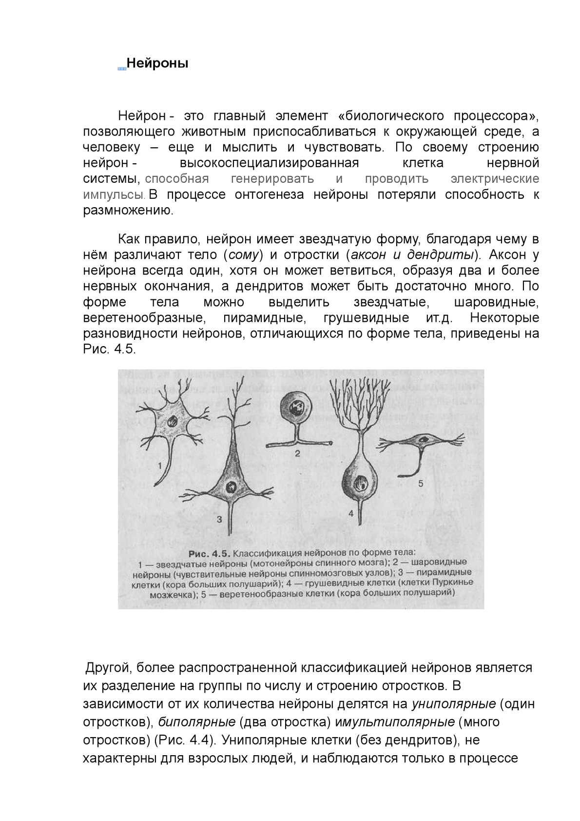 Что такое нейроны Двигательные нейроны: описание, строение и функции 96