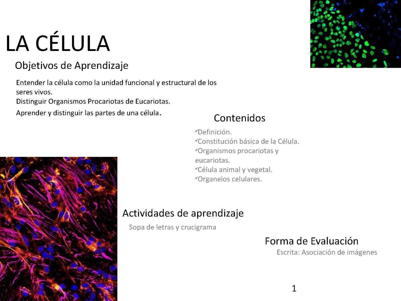 Calaméo - Periódico: La célula