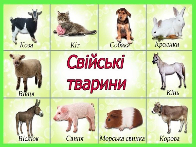 свійські тварини картинки