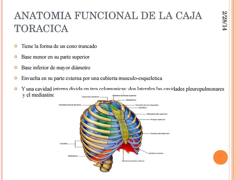 BIOMECANICA DEL TORAX Y MECANICA RESPIRATORIA - CALAMEO Downloader