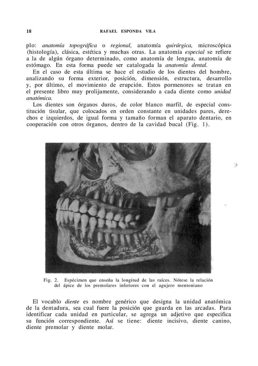 Perfecto Agujeros Anatomía Y Fisiología 13ª Edición Pdf Regalo ...