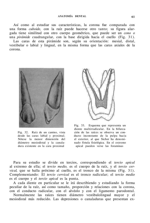 Erfreut Pulpa Anatomie Bilder - Anatomie Ideen - finotti.info