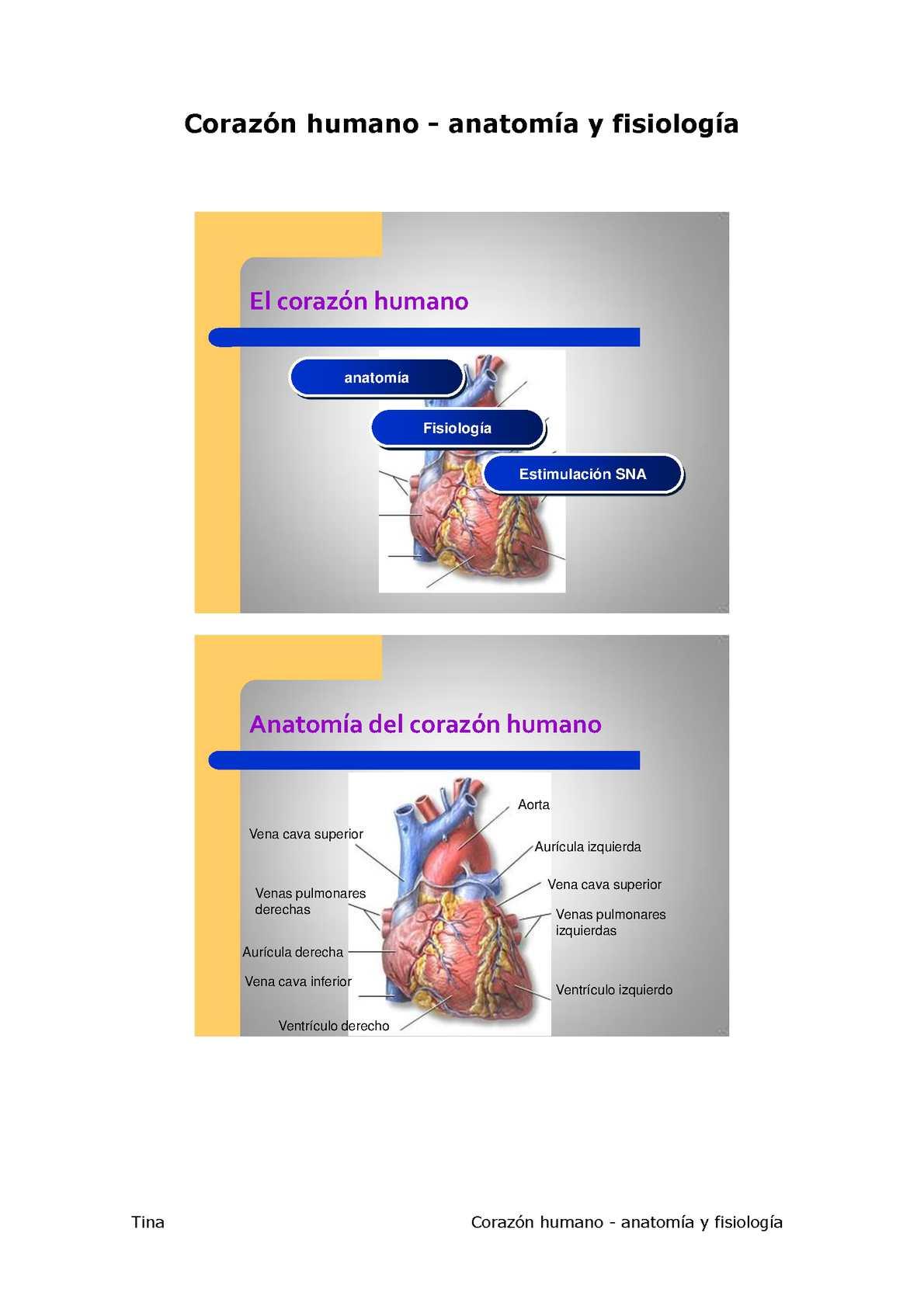 Calaméo - Anatomia del Corazon