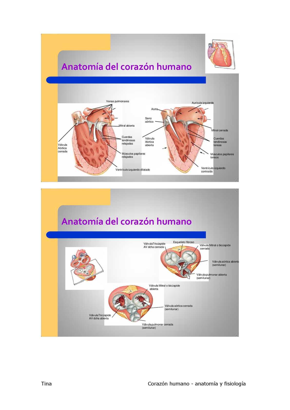 Anatomia del Corazon - CALAMEO Downloader