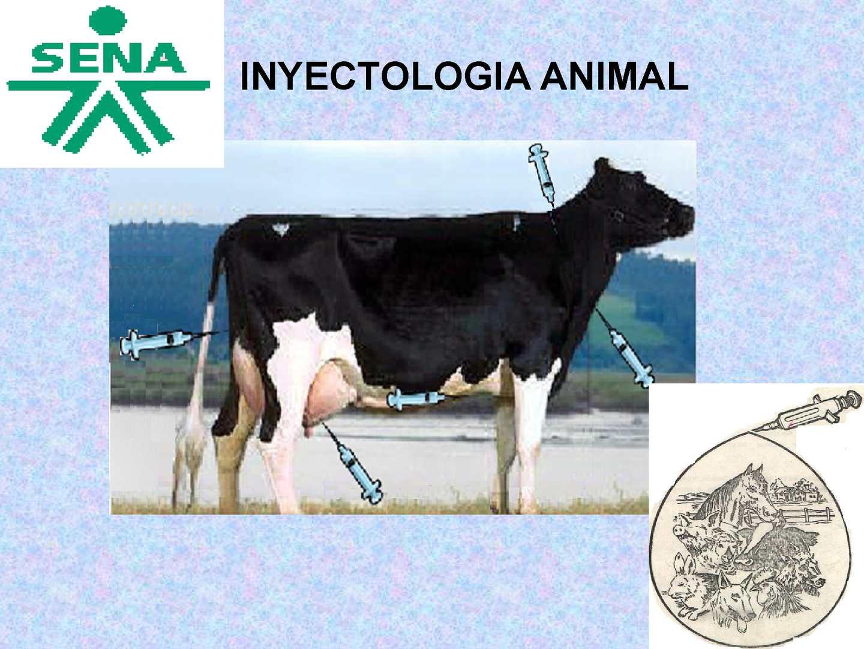 INYECTOLOGIA  EN ANIMALES