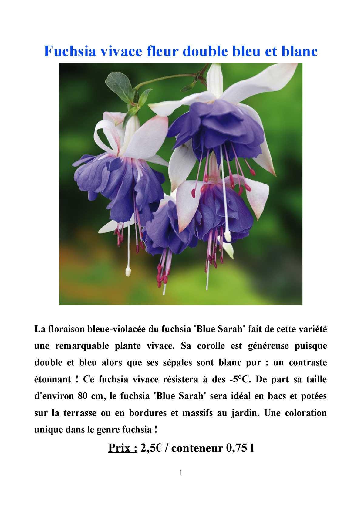 Calam o catalogue plantes annuelles plantes vivaces for Catalogue plantes vivaces
