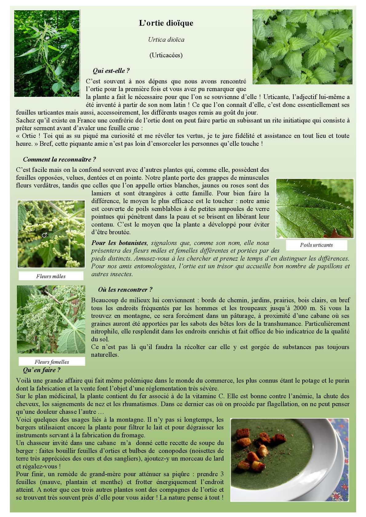 Calam o l 39 ortie plante du mois d 39 avril 2014 for Plante 6 mois