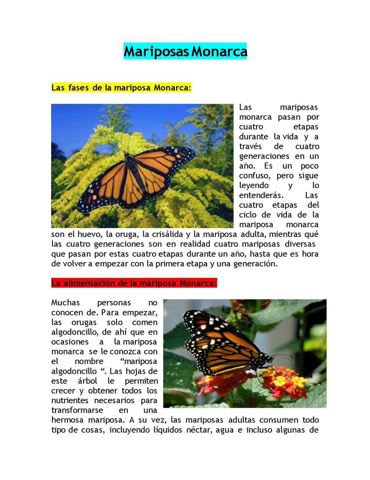 Atractivo Anatomía De La Mariposa Viñeta - Imágenes de Anatomía ...