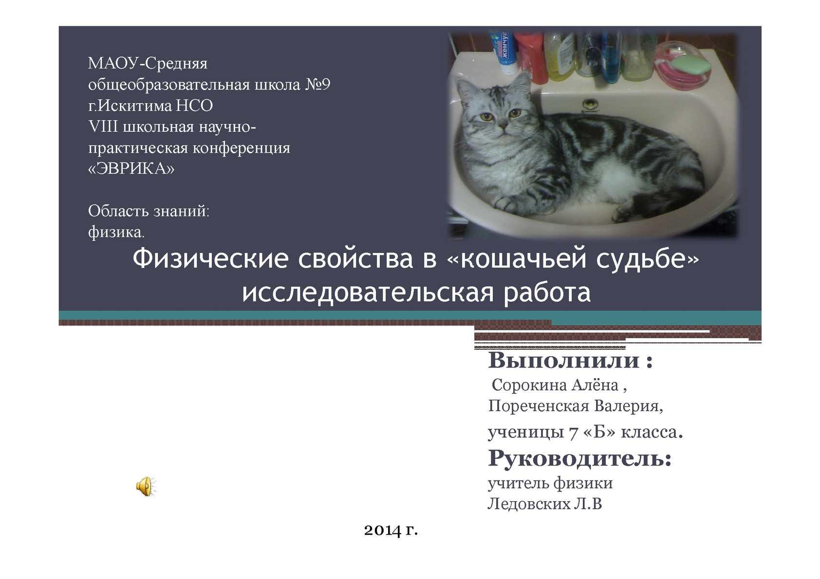 Физика и кошка