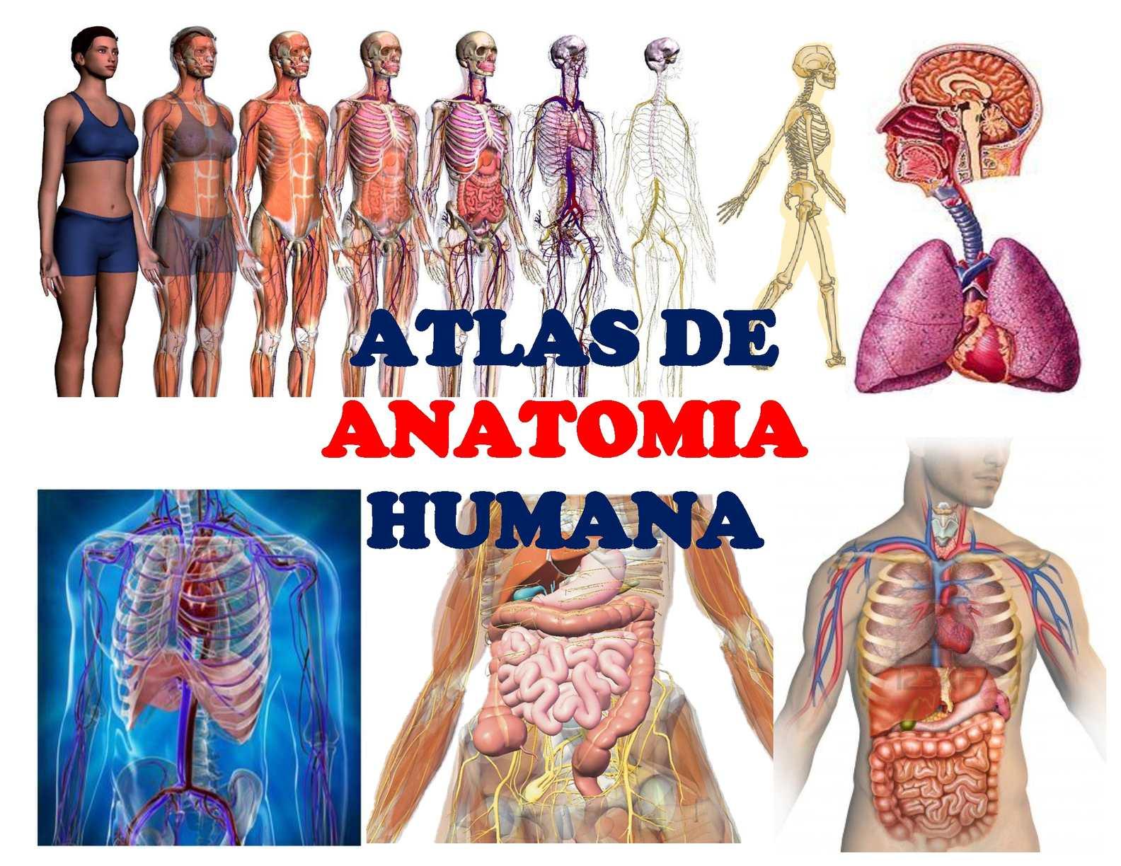 Calaméo - atlas de anatomia humana-edwin ambulodegui