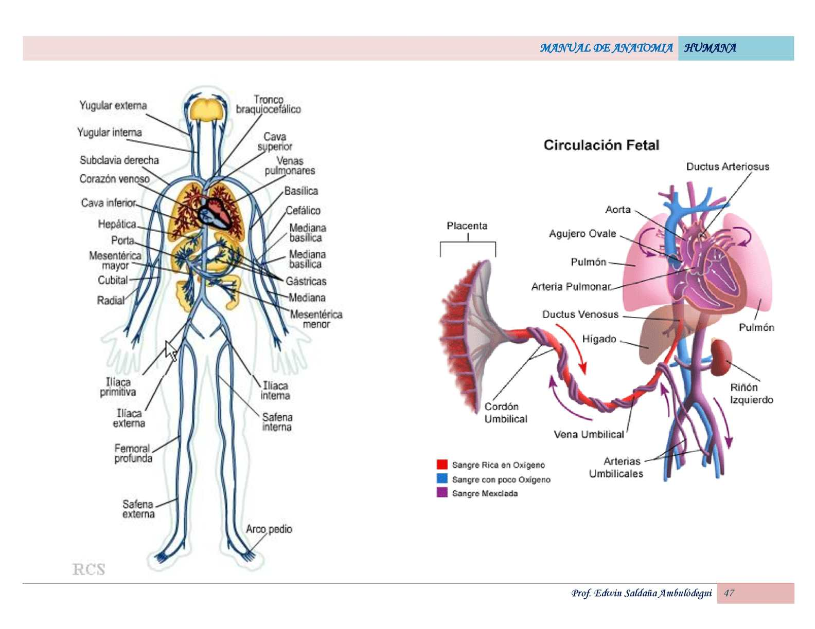 atlas de anatomia humana-edwin ambulodegui - CALAMEO Downloader