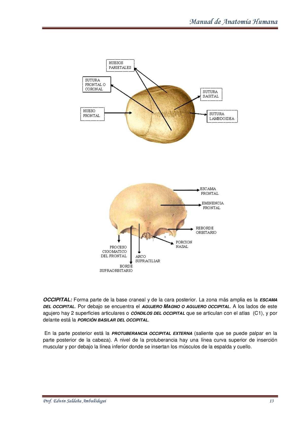 Fantástico C1 Atlas De Anatomía Bandera - Imágenes de Anatomía ...