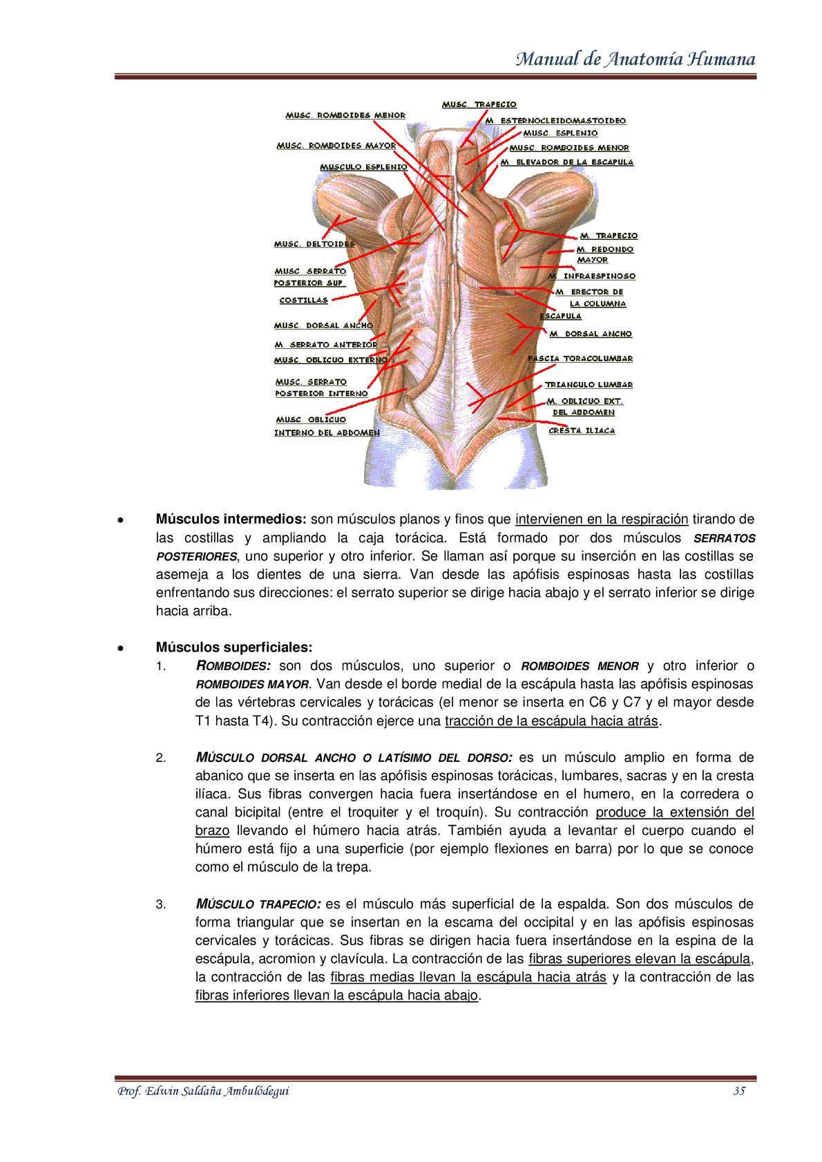 Manual de anatomia humana Edwin Ambulódegui - CALAMEO Downloader