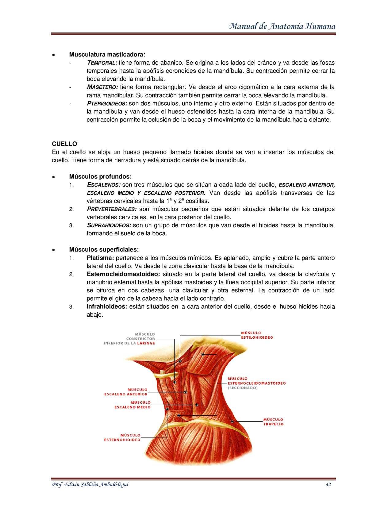 Anatomía De La Laringe Calaméo - InsureForAll