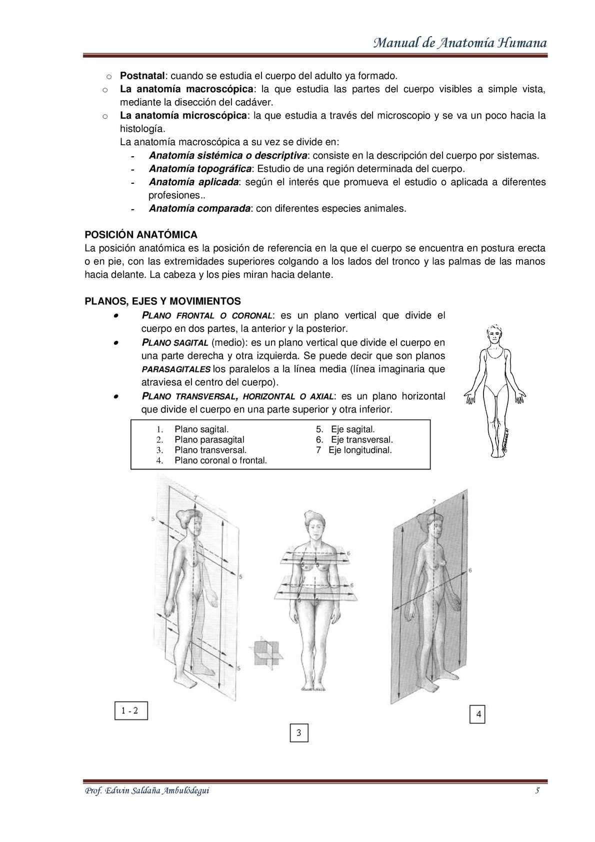 Bonito Anatomía Masculina Eje Modelo - Imágenes de Anatomía Humana ...