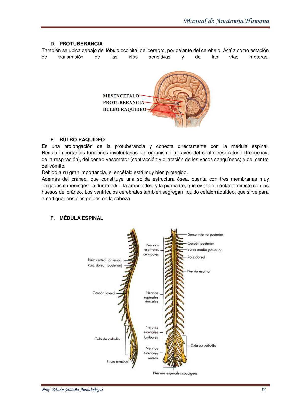 Famoso Anatomía De Un Caballito De Mar Festooning - Imágenes de ...
