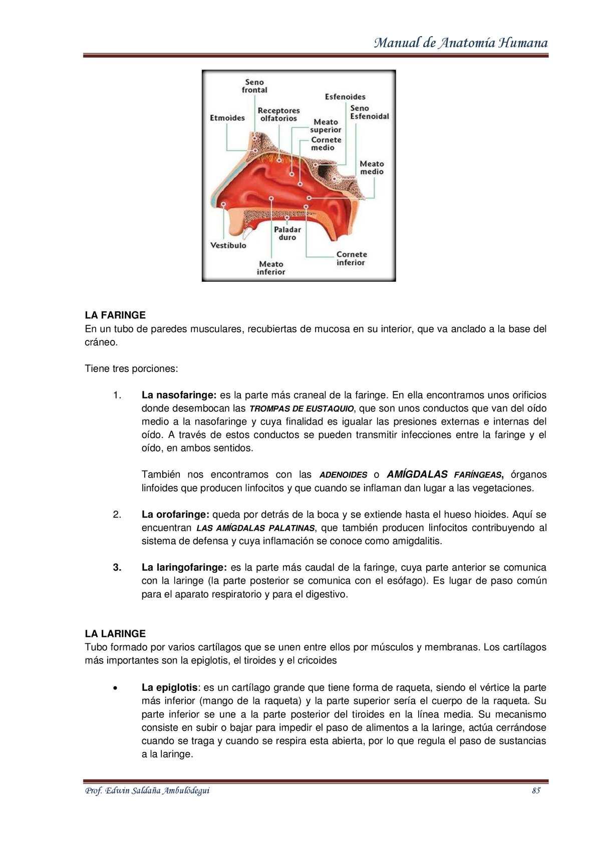 Manual de anatomia humana Edwin Ambulódegui - CALAMEO Downloader