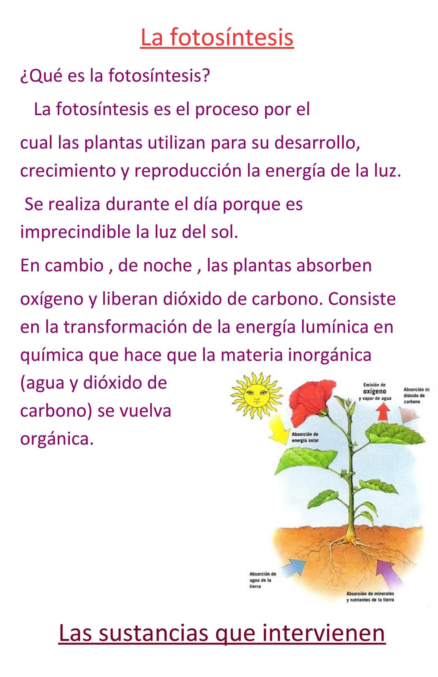 El proceso de la fotosintesis en la noche 40