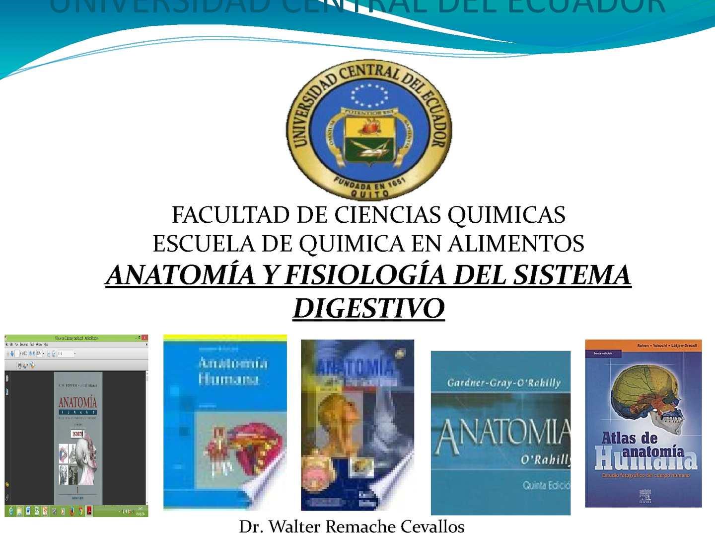 Calaméo - 1 Sistema Digestivo