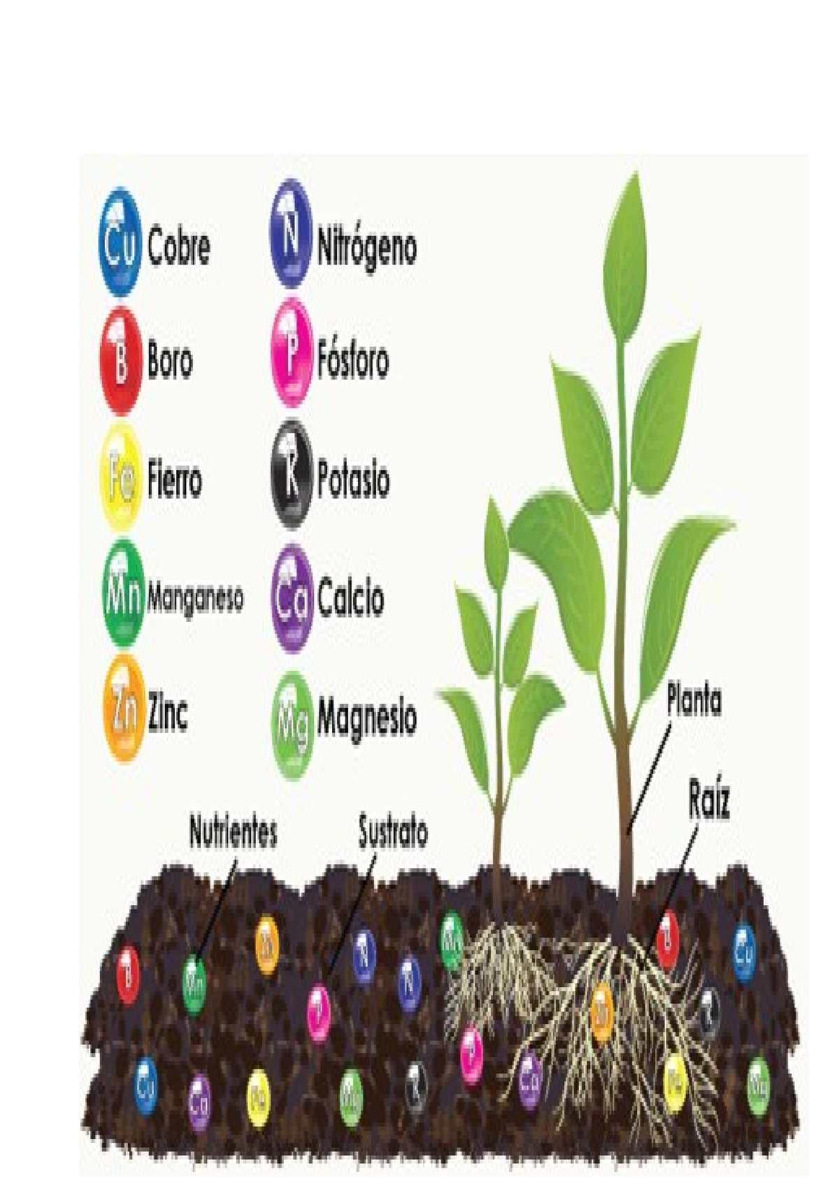 Calam o macro y micronutrientes del suelo for Componentes quimicos del suelo