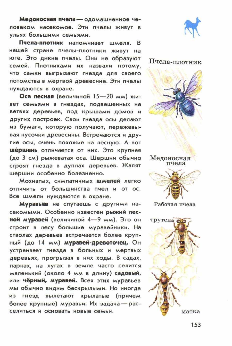Краткая информация о шмелях, описание, внешний вид и т.д