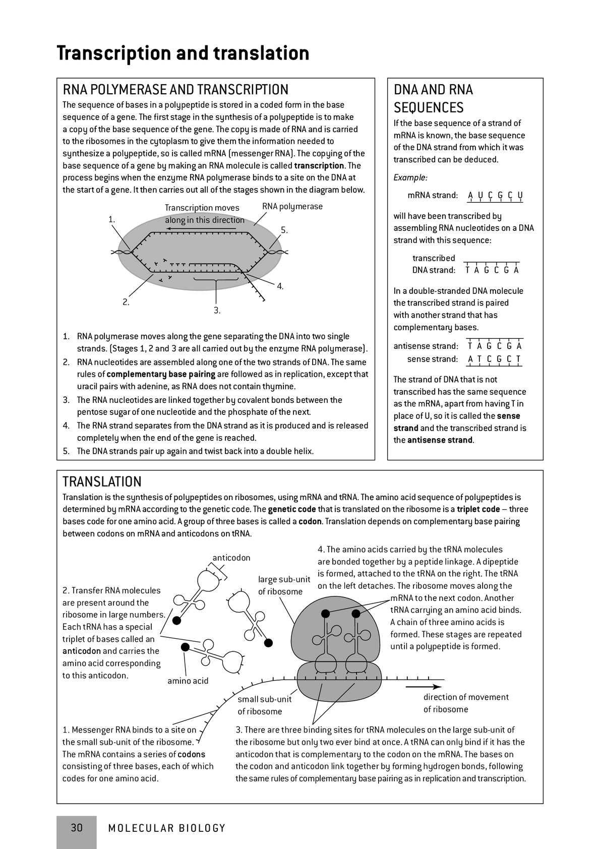 Amazon.com: ib biology study guide