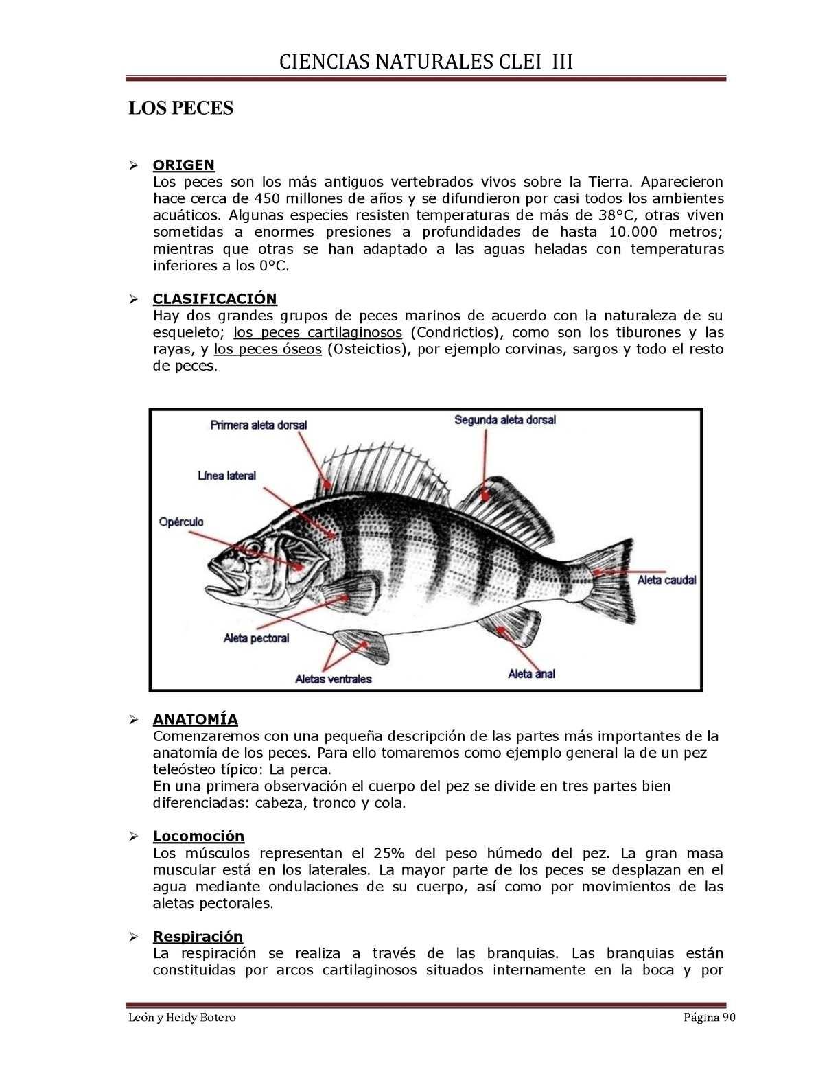 CIENCIAS NATURALES CLEI III - CALAMEO Downloader