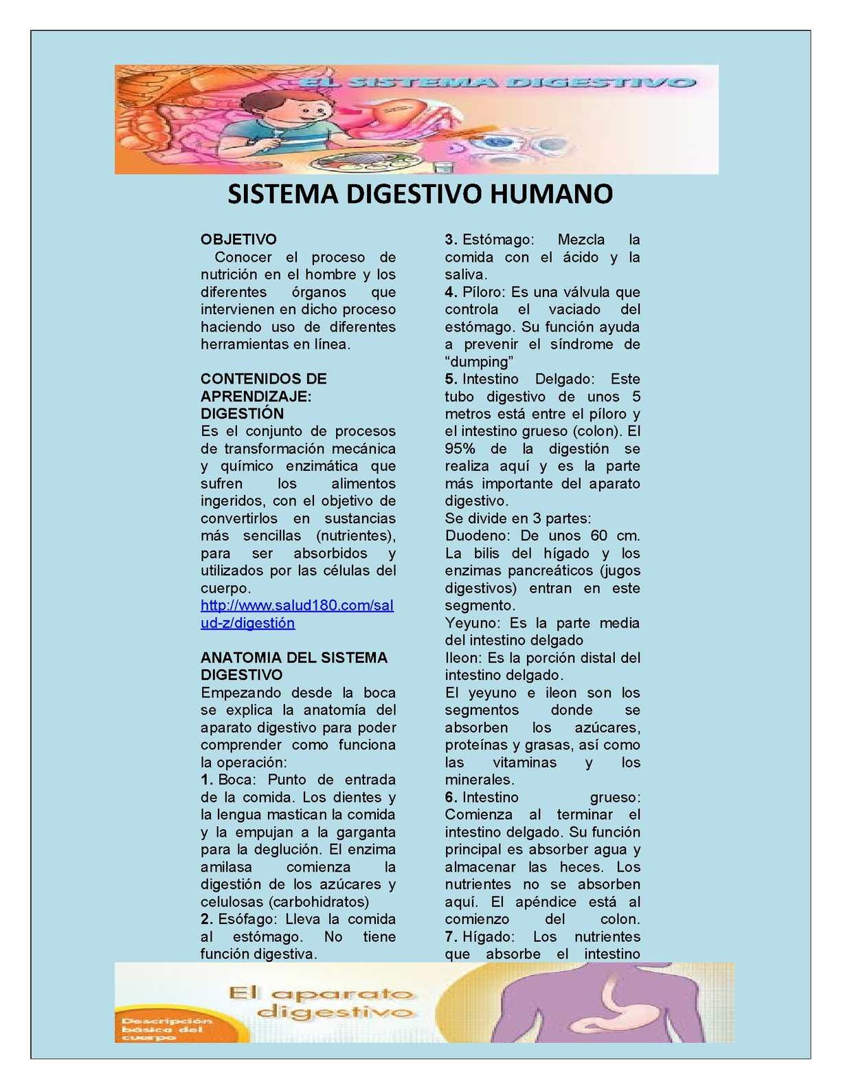 Calaméo - Sistema Digestivo 1