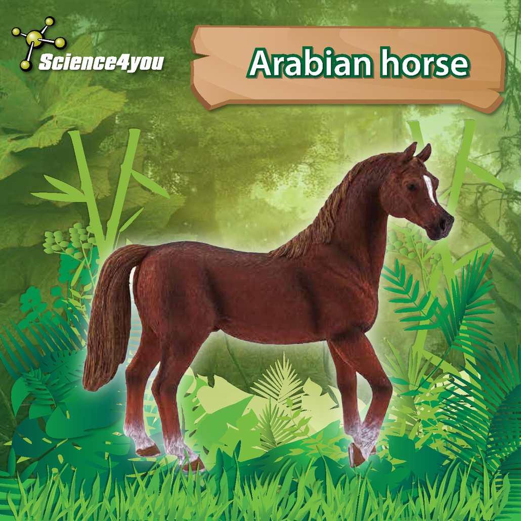 E-Book Arabian Horse