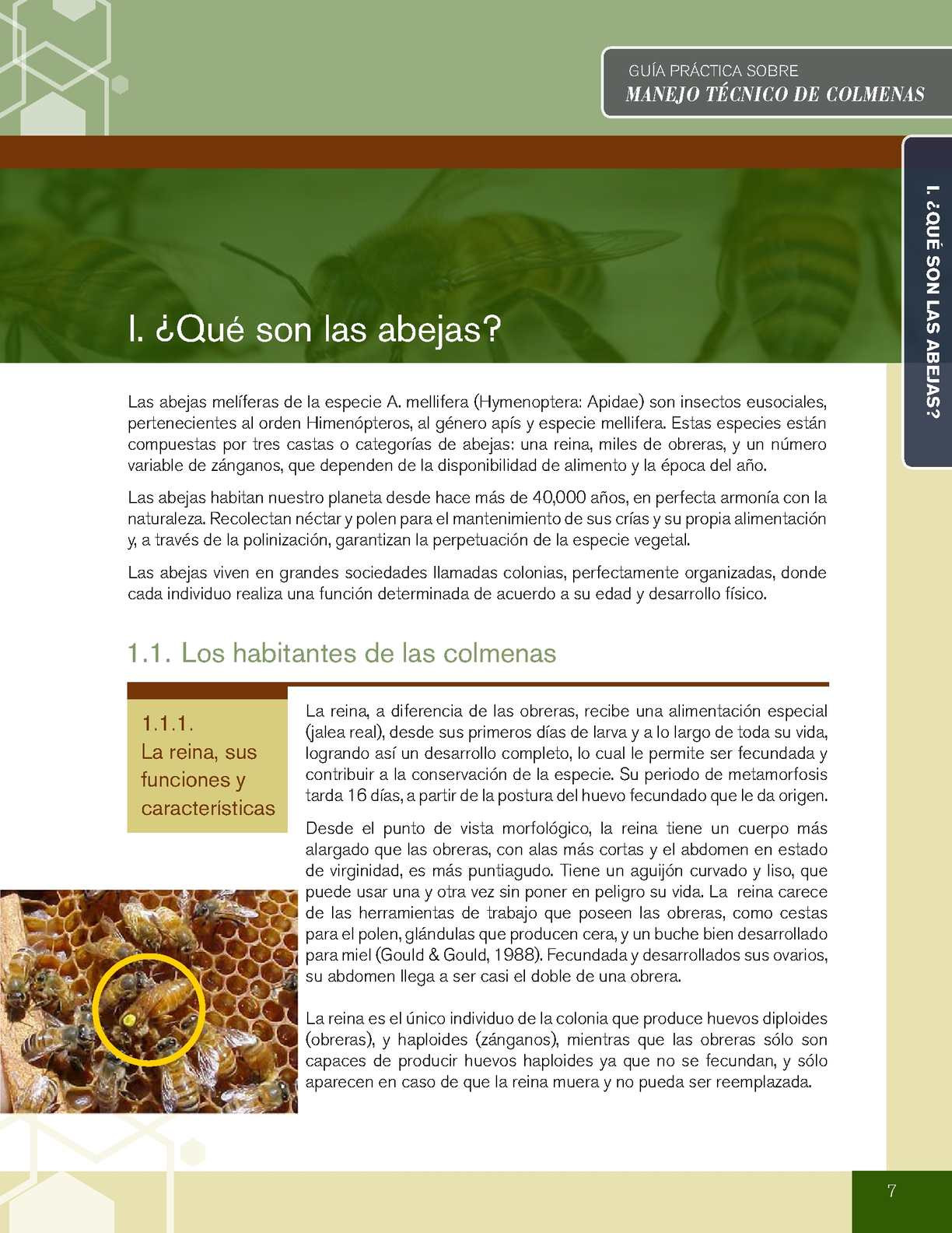Manejo Tecnico De Colmenas - CALAMEO Downloader