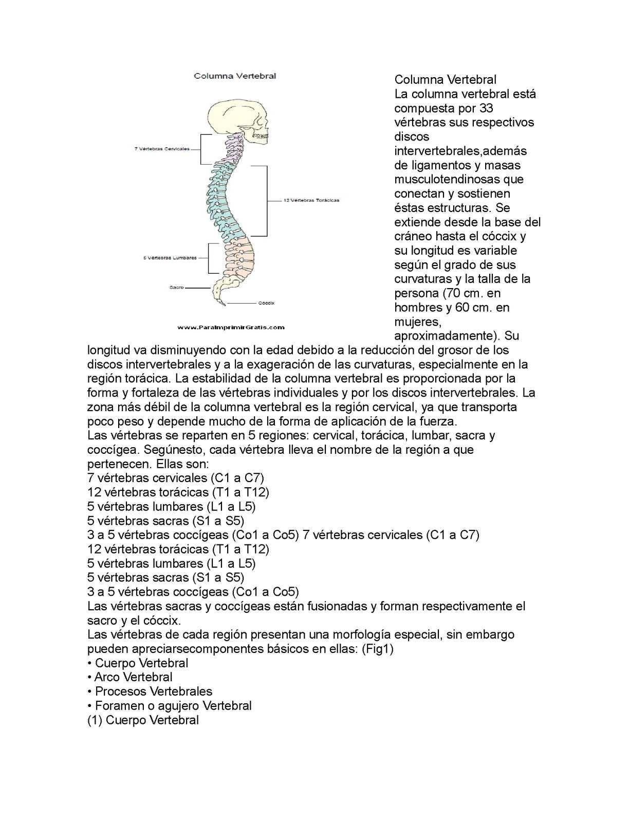Calaméo - Columba Vertebral Pm