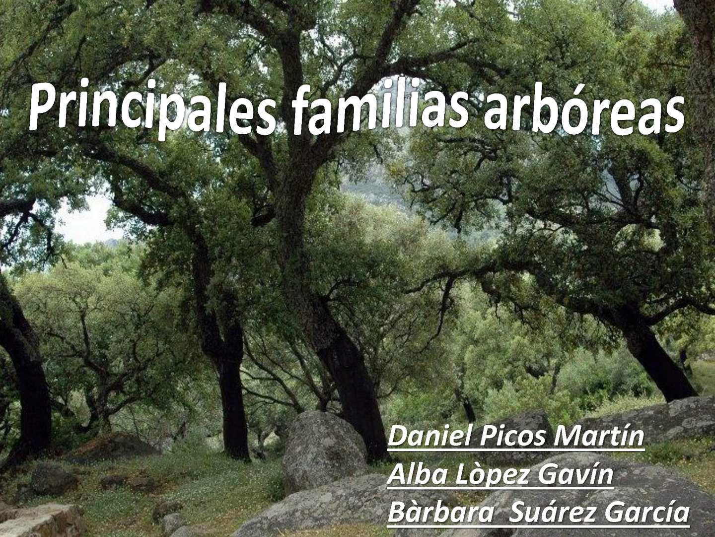 Principales familias arboreas
