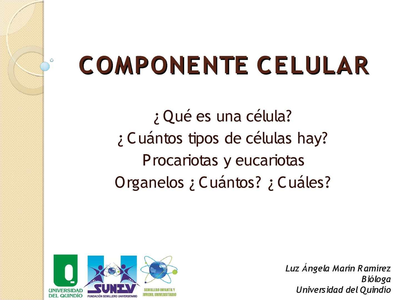 Calaméo - Componente Celular