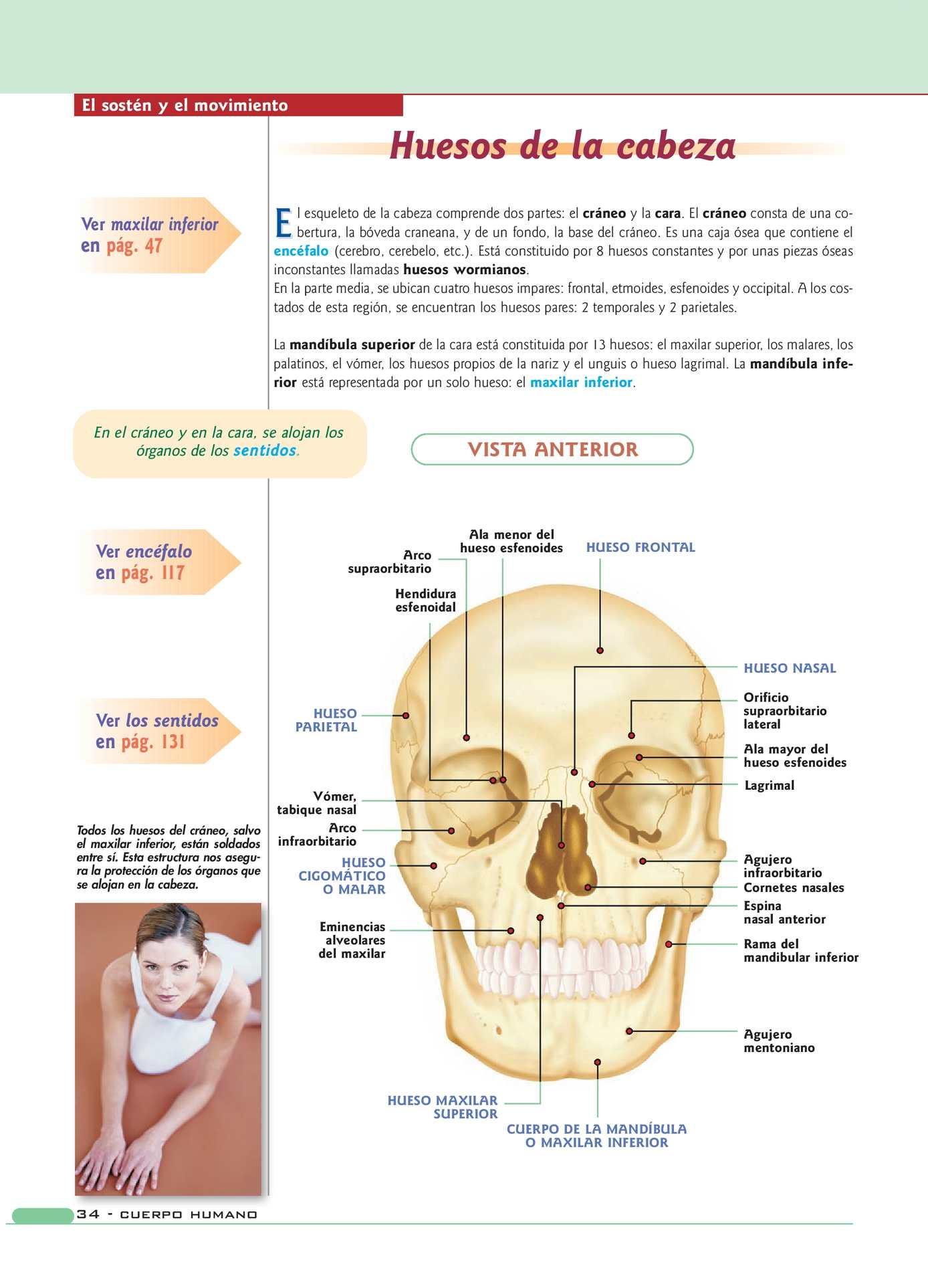 Anatomia - CALAMEO Downloader