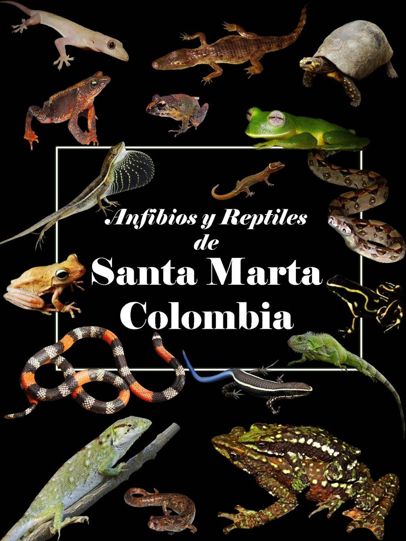 Guia De Campo De Anfibios Y Reptiles De Santa Marta