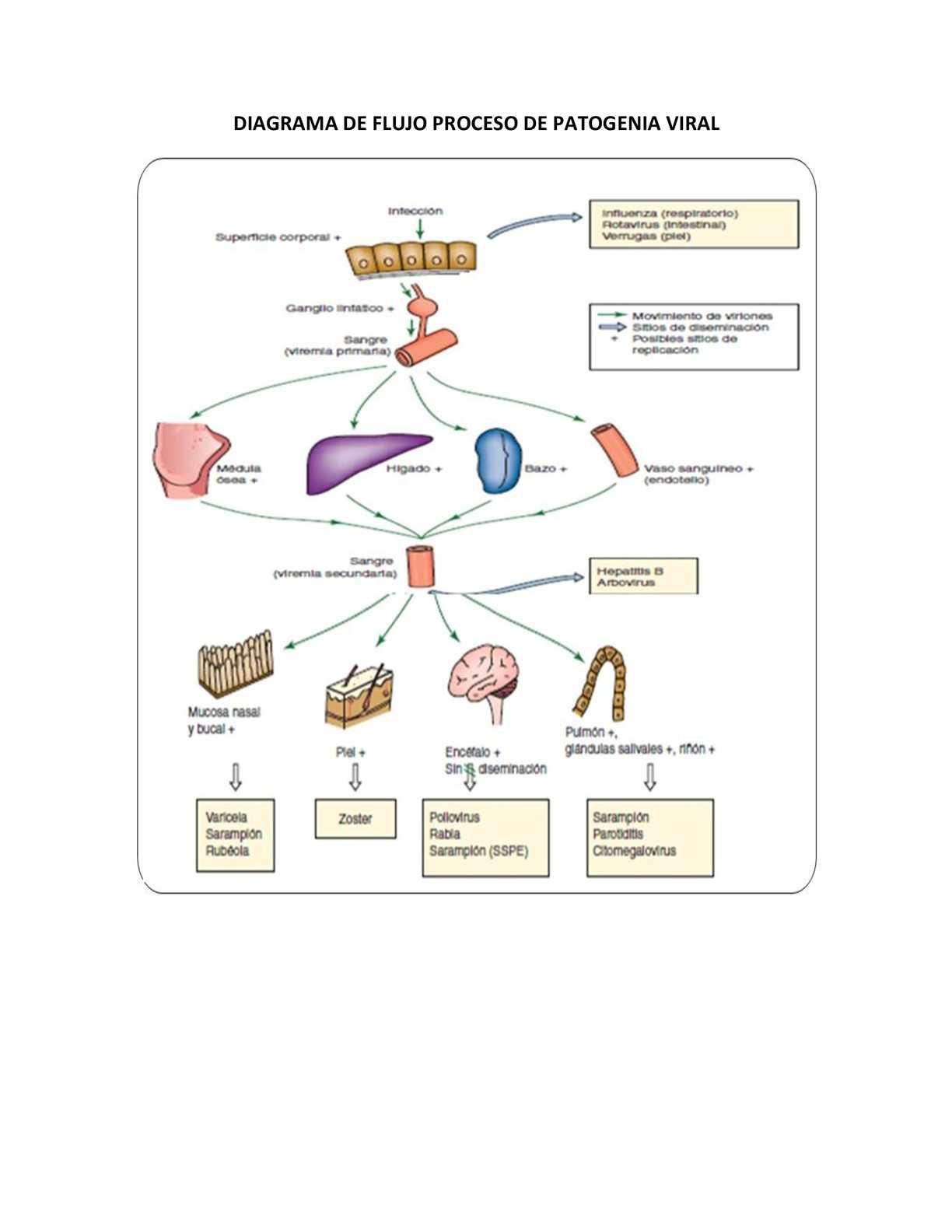 Vistoso Etiquetar El Diagrama De La Anatomía Del Cerebro Motivo ...
