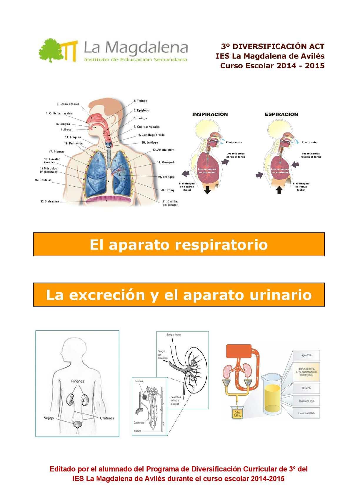 Calaméo - El Aparato Respiratorio, la Excreción y el Aparato Urinario