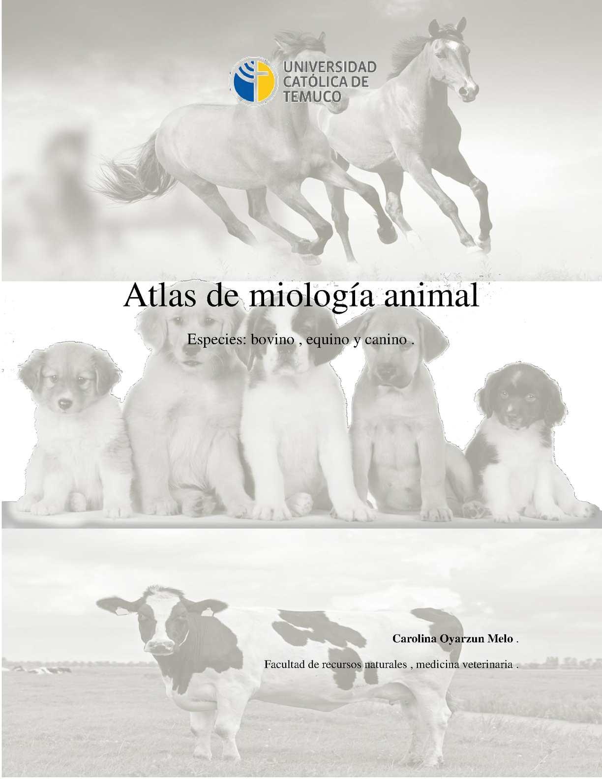Calaméo - atlas de Miologia animal