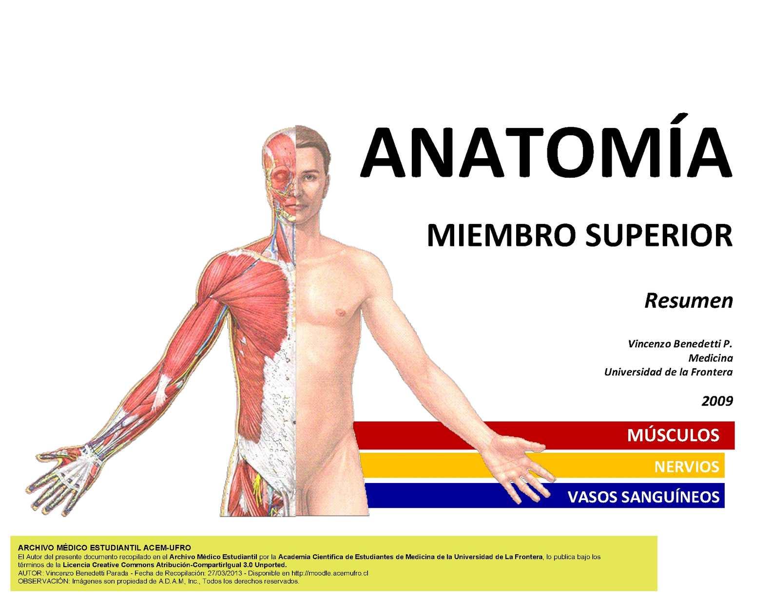 Calaméo - Anatomía Resumen Músculos Miembro Superior