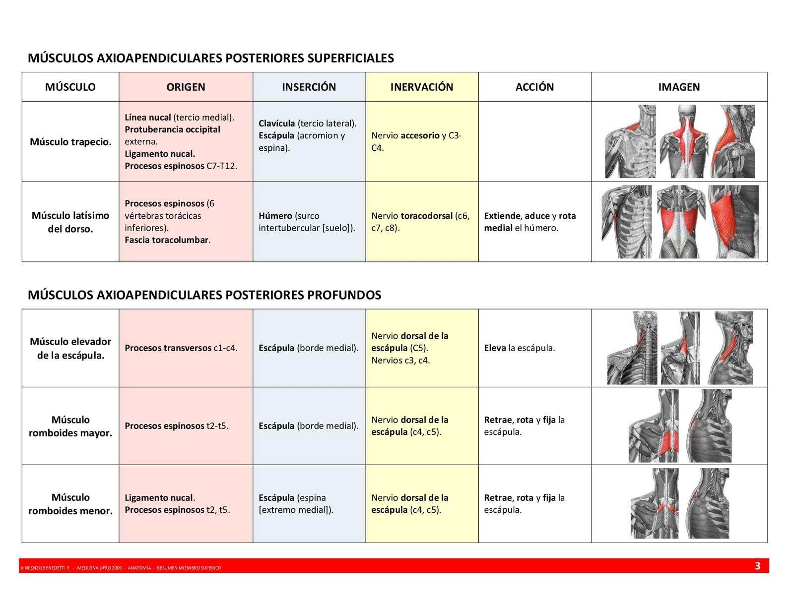 Anatomía Resumen Músculos Miembro Superior - CALAMEO Downloader