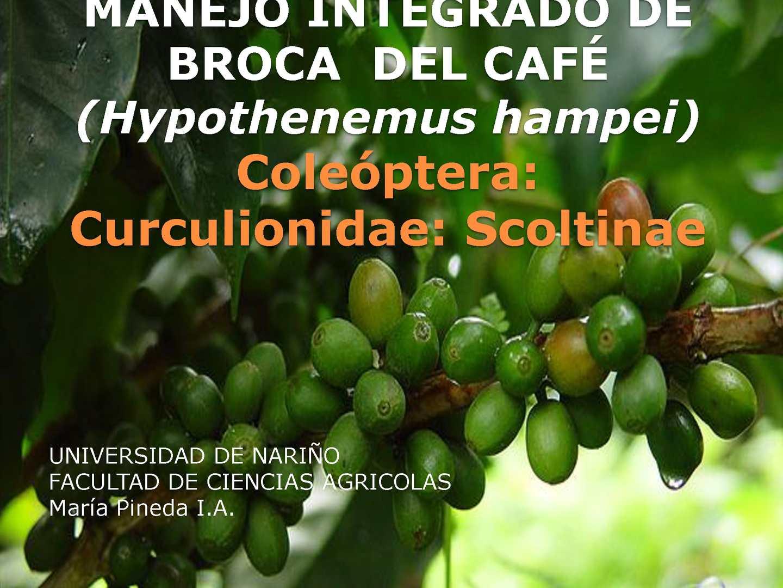 Manejo Integrado De Broca Del Café