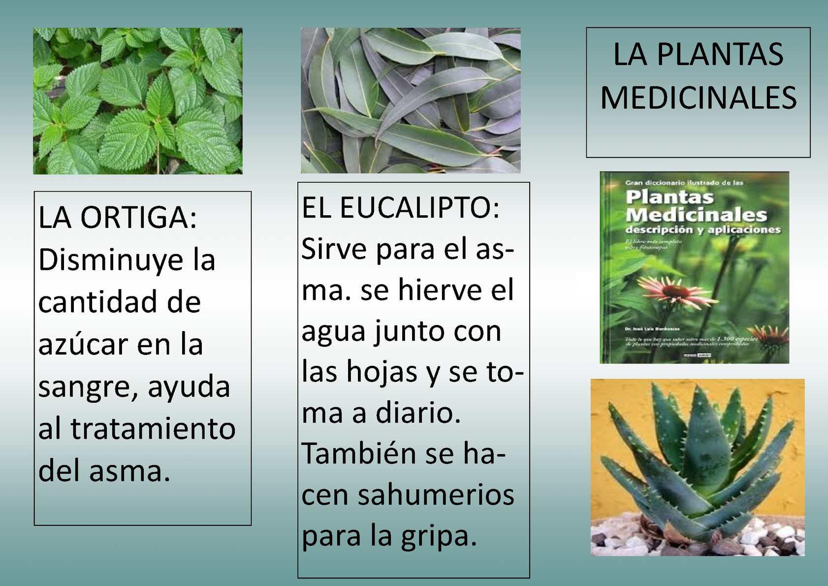 Calam o folleto plantas medicinales for Para q sirven las plantas ornamentales