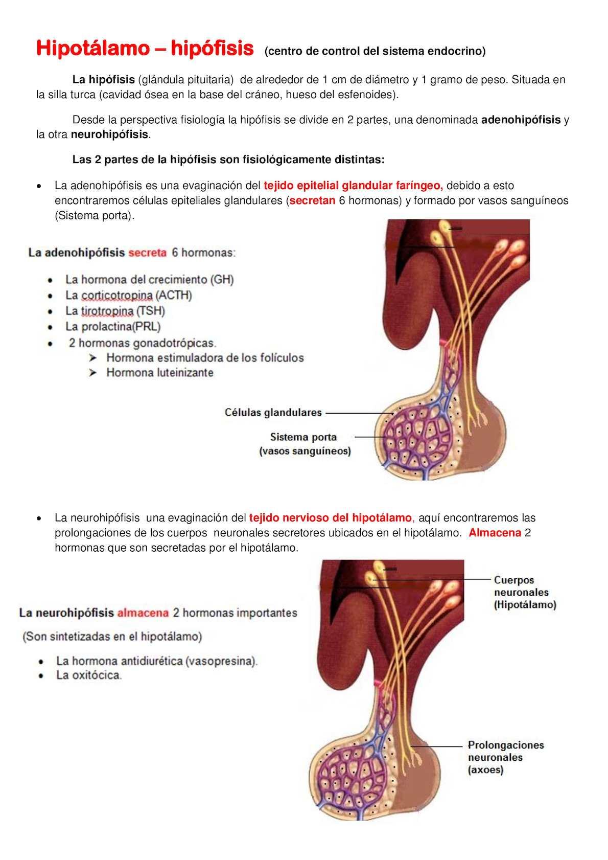 Perfecto Anatomía Silla Turca Regalo - Imágenes de Anatomía Humana ...
