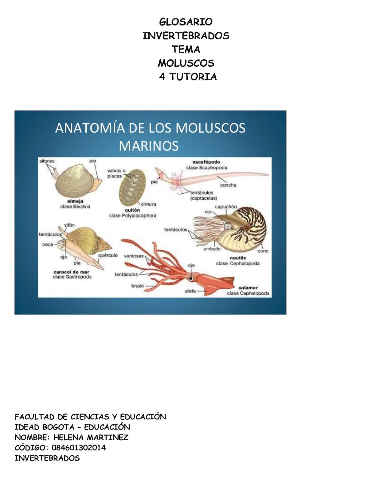 Calaméo - Moluscos 4 T