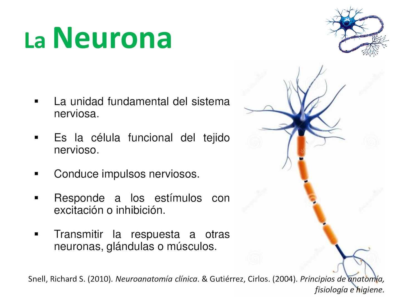 3 Tejido Nervioso - CALAMEO Downloader