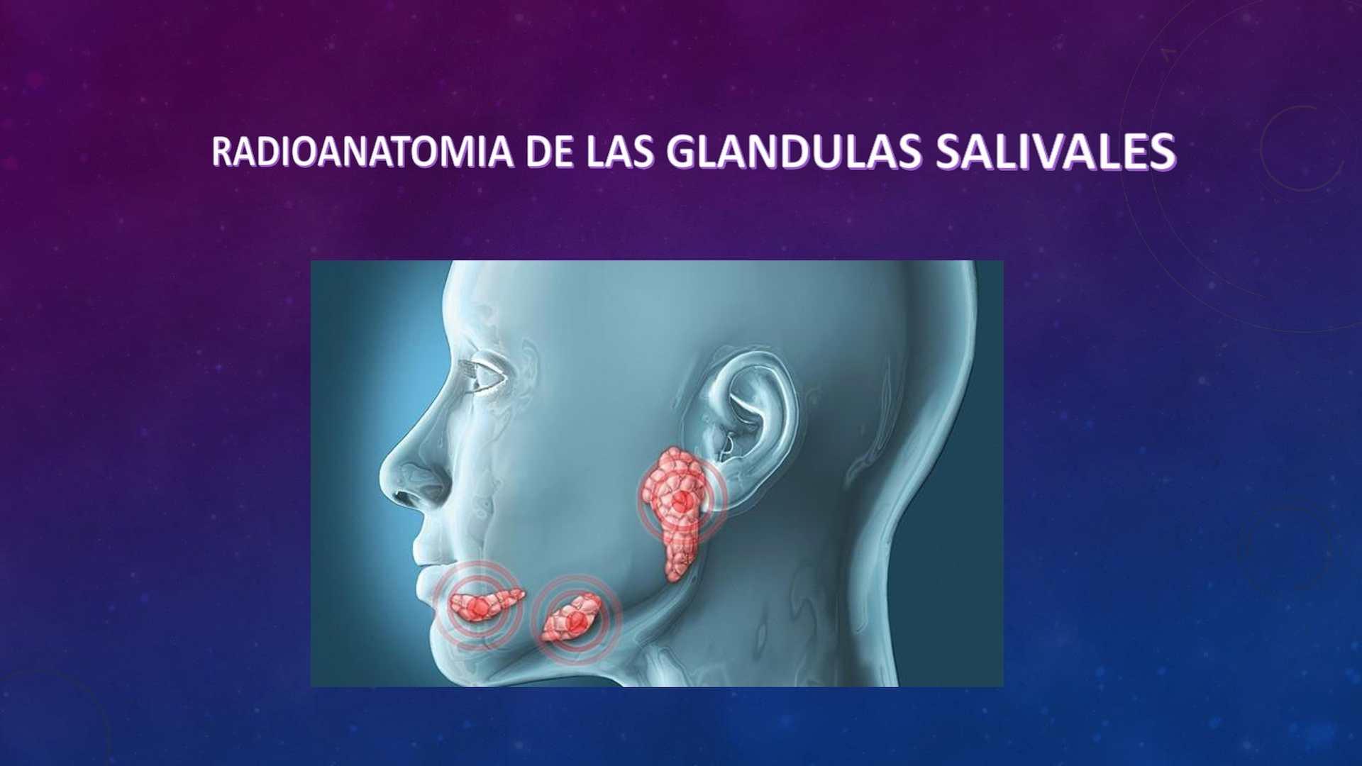 Calaméo - Radioanatomia De Las Glandulas Salivales